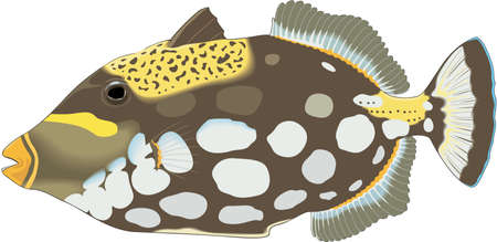 Clown Triggerfish Illustration 版權商用圖片 - 83947626