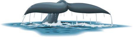 Ilustración de la cola de la ballena