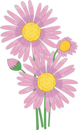 aster: Italian Aster Illustration Illustration