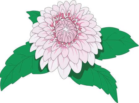 ダリアの図  イラスト・ベクター素材