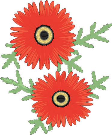 African Daisy Illustration Stock fotó - 83947664