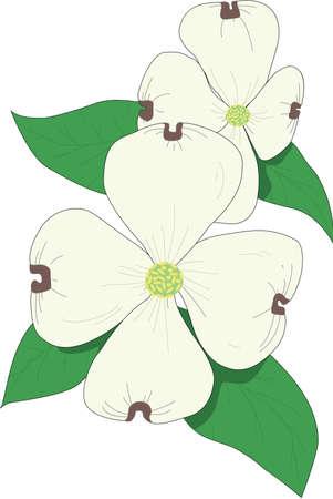 Dogwood Illustration Illustration