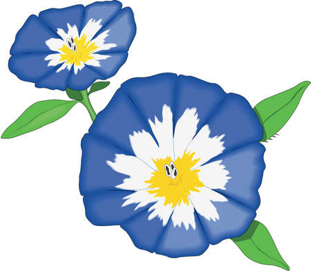 Dwarf Morning Glory Illustration