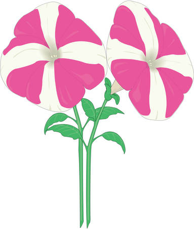 Dwarf Petunia Illustration