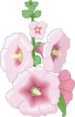 Hollyhock Illustratie