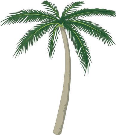 ヤシの木のイラスト  イラスト・ベクター素材