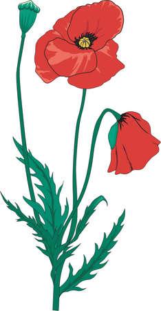 赤いポピーの図
