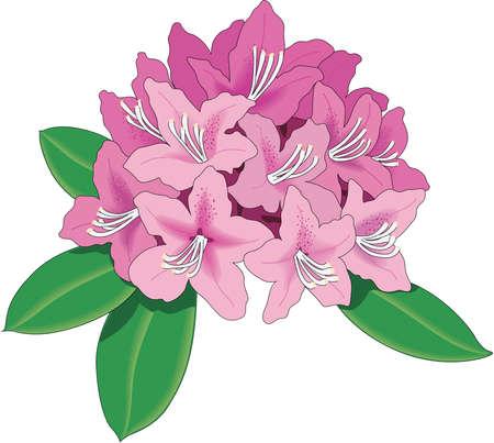 Rhododendron Illustration Ilustracja