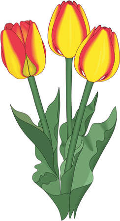 Illustration de tulipes Mendel Banque d'images - 83996259