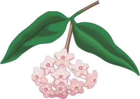 ワックスの植物図  イラスト・ベクター素材