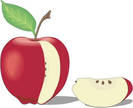 Apple Slice Illustration Çizim