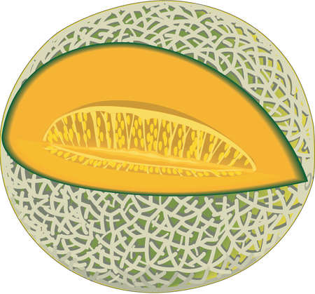 Cantaloupe Illustration Standard-Bild - 84124133