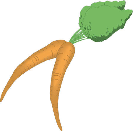 Carrots illustration. Ilustracja