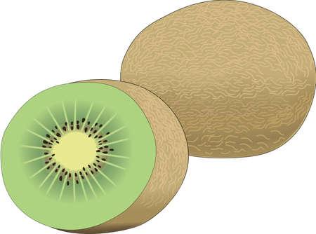 Kiwi fruit illustration. Illustration
