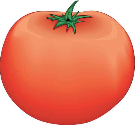 Tomato Illustration.