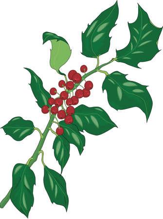 Holly Illustratie