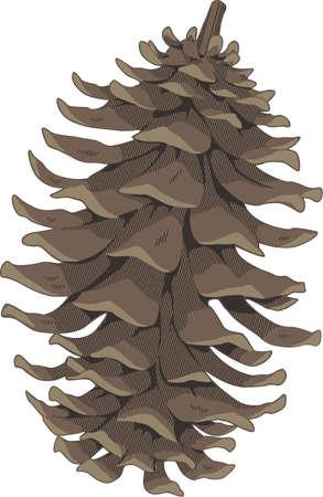 Pine Cone Illustration perfect shape isolated on white background
