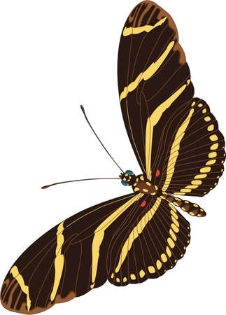 Zebra Butterfly Illustration Фото со стока - 84002533