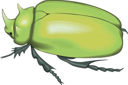 Scarab Beetle Illustration Illustration