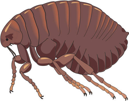 flea: Flea Illustration