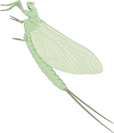 Mayfly Illustration Фото со стока - 84002552