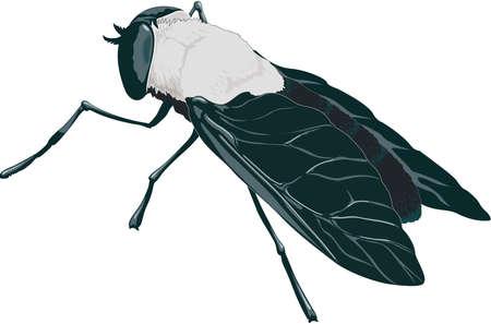 Horse Fly Illustration Фото со стока - 84002650