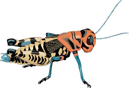 Rainbow Grasshopper Illustration