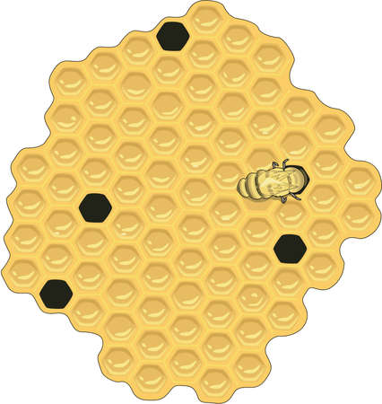 Honey Comb Illustration