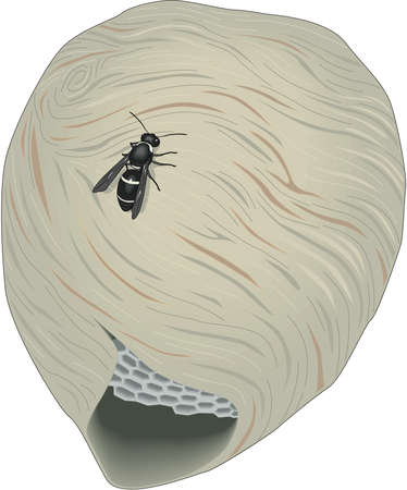 Hornets Nest Illustration