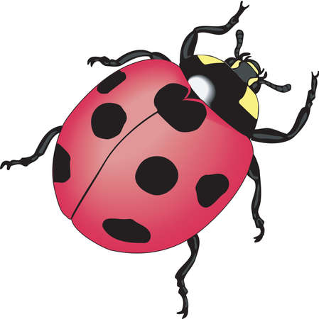 ladybird: Ladybug Illustration Illustration