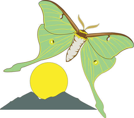 Luna Moth Illustration