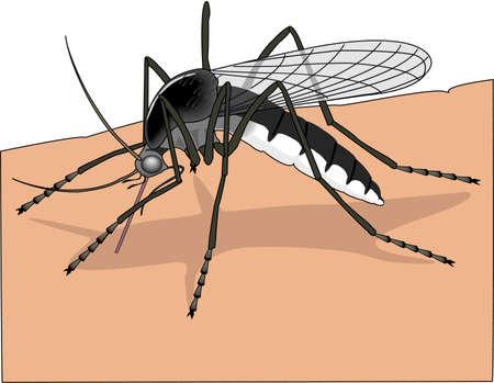 mosquitos: Summer Mosquito Illustration