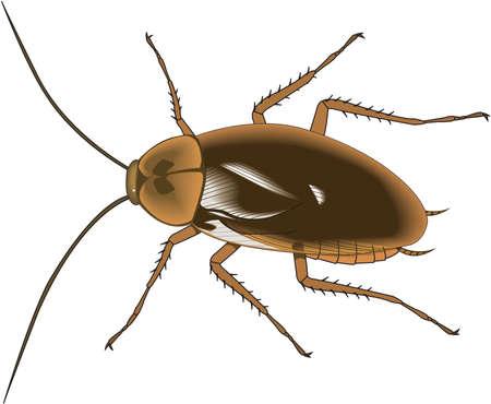 Amerikaanse kakkerlak illustratie Stock Illustratie