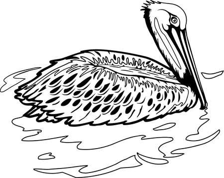 Brown Pelican illustration. Banco de Imagens - 85611892