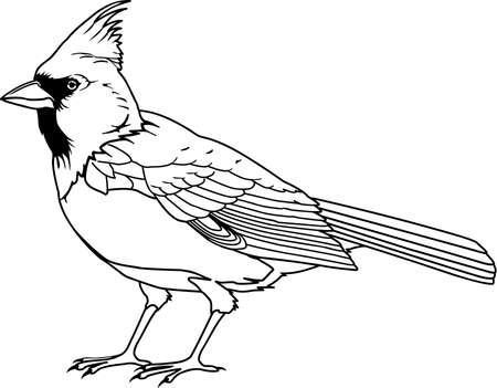 Ilustración cardenal Foto de archivo - 85611924