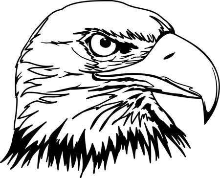 Eagle head illustration.
