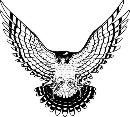 Peregrine Falcon illustration.