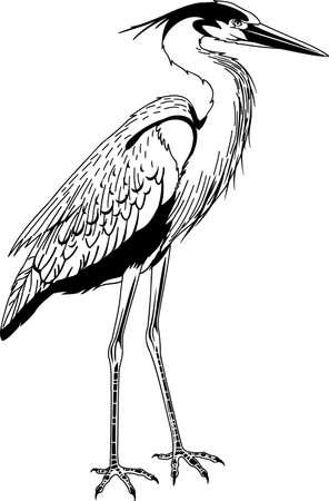 Great Blue Heron illustration. Vettoriali