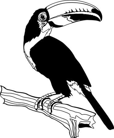 Toco Toucan illustration. Ilustrace