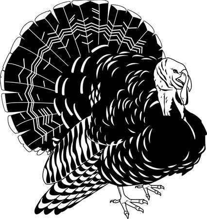 Turkey illustration.
