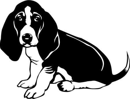 Basset Hound Illustration.