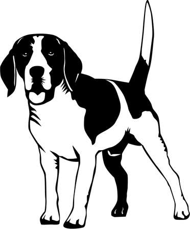 Beagle Illustration.