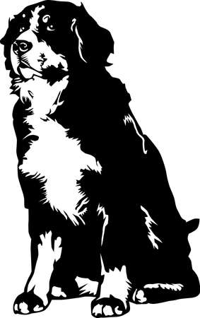 Bernese Mountain Dog Illustration.