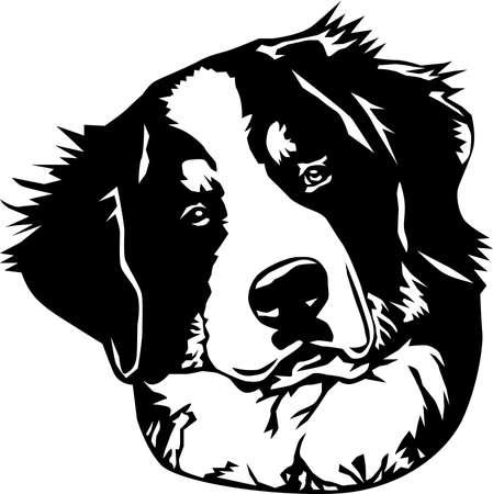 Bernese Mountain Dog Illustration,