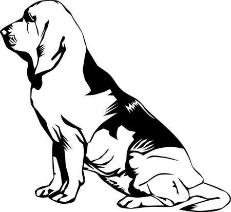 Bloodhound Illustration. Illustration