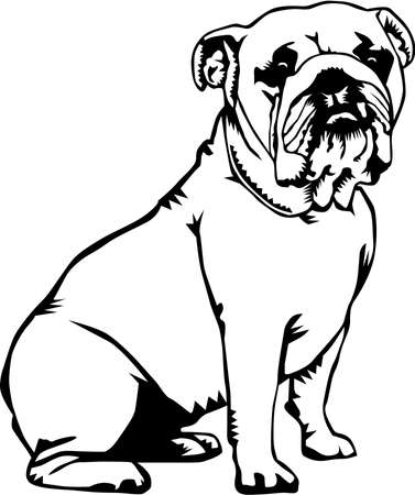 A bulldog Illustration. Çizim
