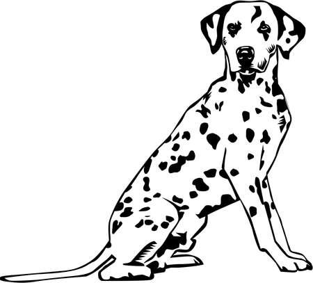 Dalmatian Illustration. Ilustrace