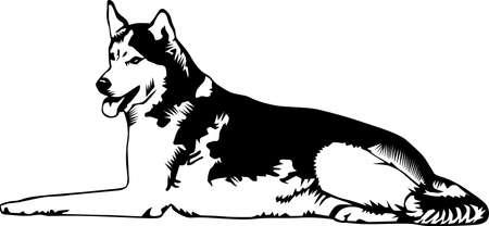 Husky Illustration. Illustration