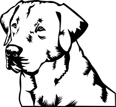 Labrador Retriever Illustration.