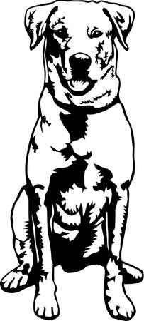 Labrador Retriever Illustration.